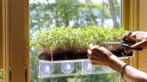 mini greens growing gardens window garden