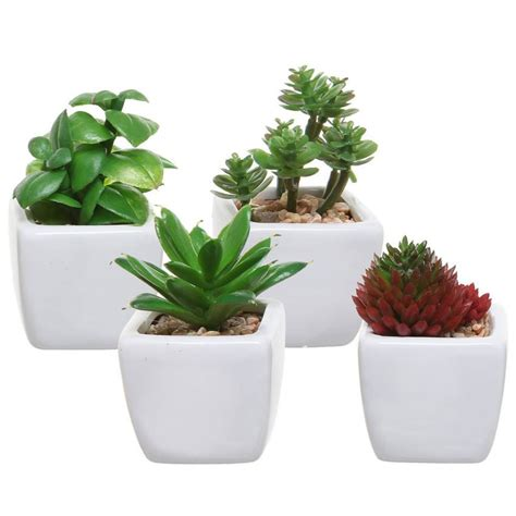plants for desk 25 office plants that fit on your desk