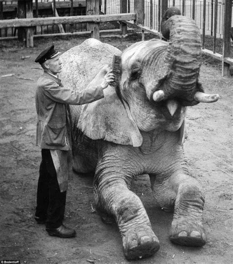 Zoo Zoo Brush Black photographs reveal what used to be like at the