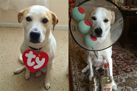 Best Easy Cheap Detox For Dogs by 5 Easy Cheap Diy Costumes For Your And
