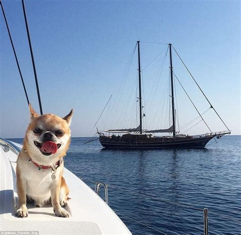 house of dog miami is miami the instagram chihuahua the world s most travelled dog daily mail online