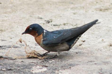 Tempat Makan Burung Unik 7 hewan yang bisa menjadi makanan saat tersesat di hutan