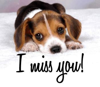 i miss you puppy i miss you puppy miss you myniceprofile