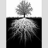 Family Tree Roots Background | 279 x 380 jpeg 47kB