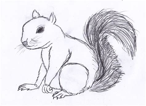 how to a squirrel how to draw a squirrel hqdraw