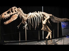 Who Find Dinosaur Bones Dinosaur Bones From Mongolia Spark International Dispute