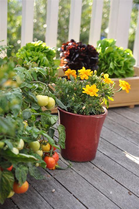 edible container garden 187 my edible container garden