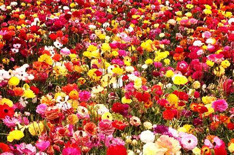 foto di fiori da scaricare gratis immagini di fiori 47 foto sfondi hd bonkaday