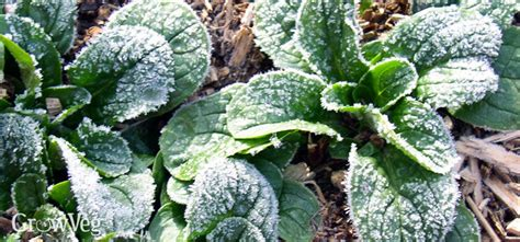 vegetables that grow in winter best vegetables to grow in winter