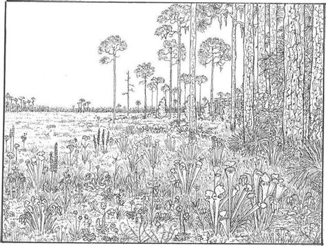 detailed landscape coloring pages for adults very detailed coloring pages bestofcoloring com