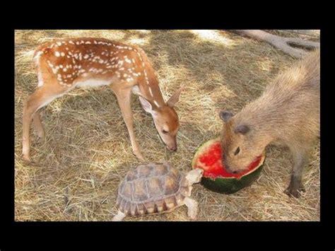 imagenes insolitas e increibles 161 amigos incre 237 bles amistades ins 243 litas entre animales
