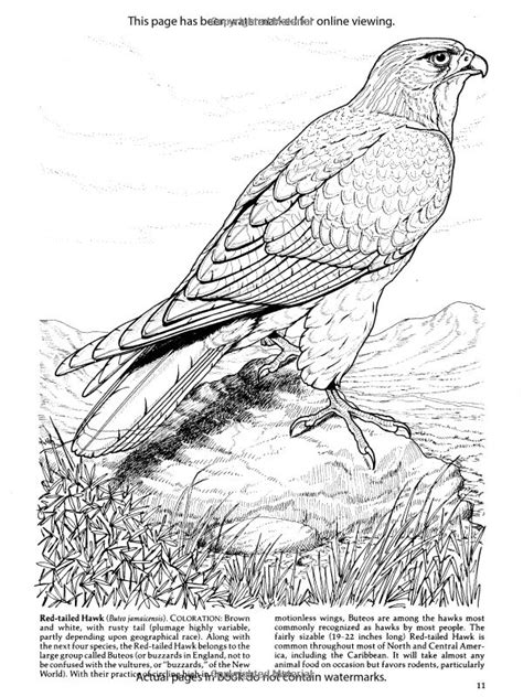 1000 Images About Colouring Pages On Pinterest Coloring Birds Of Prey Coloring Pages