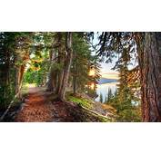 Nature HDR Landscape Lake Trees Forest Path Dirt