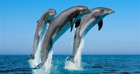 and dolphin 187 dolphin and whale in kalpitiya one day tour