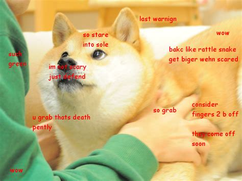 How To Make Doge Meme - 1000 images about such doge wow so much doge on pinterest
