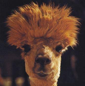 Bad Hair Day Helpers On The Way by Meer Dan 1000 Afbeeldingen Bad Hair Day Op