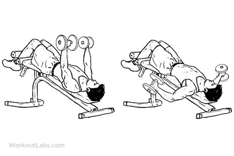 decline bench fly decline dumbbell fly illustrated exercise guide