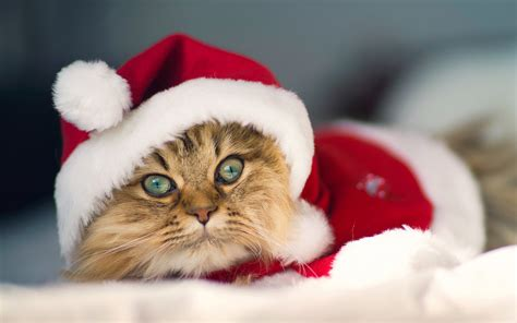 wallpaper cat christmas beautiful christmas cat wallpapers and images wallpapers