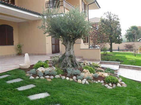 giardino con ulivo abbellire un albero di ulivo ecco 16 splendidi esempi per