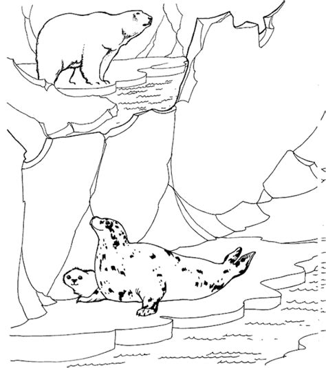 coloring pages arctic animals free printable zoo coloring pages for kids