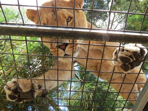 animali da gabbia animali da gabbia 28 images gabbia in legno per