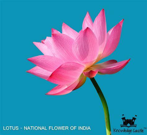 lotus  national flower  india india pinterest
