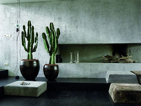 cactus interior on trend succulents and cacti for interiors vkvvisuals