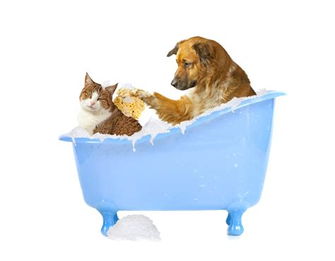 bathtub dog lavare il cane ed il gatto quando come e perch 233 blog