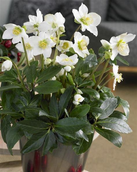 Pflegeleichte Gartenpflanzen by Pflegeleichte Gartenpflanzen Winterhart Spinjo Info