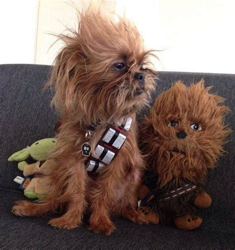 yorkie chewbacca costume chewbacca costume www pixshark images galleries with a bite
