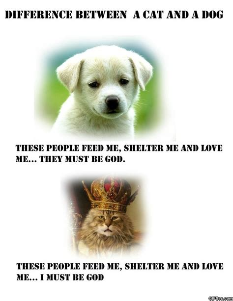 difference between and dogs pictures wp content uploads 2011 09 cat vs jpg memes