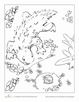 coloring page horned lizard horned lizard coloring page education com