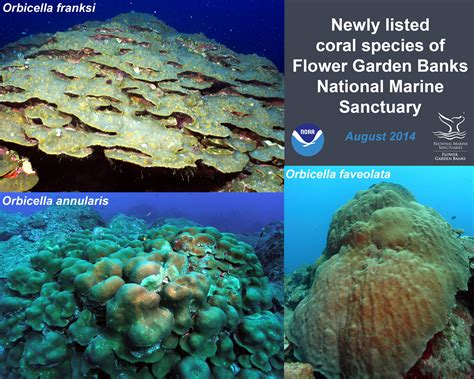 Flower Garden Banks National Marine Sanctuary Noaa Noaa Flower Gardens National Marine Sanctuary