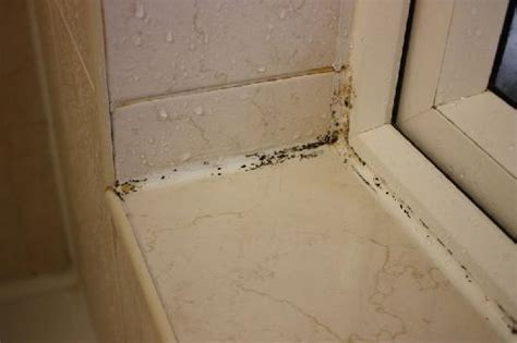 what causes mould in bathrooms wallpaper mould picture of holiday villa hotel and