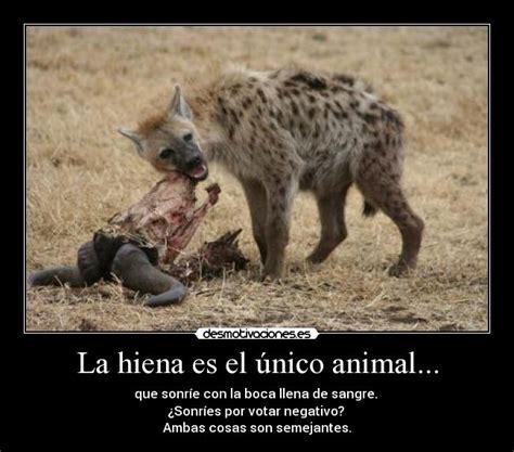 imagenes de memes animales la hiena es el 250 nico animal desmotivaciones