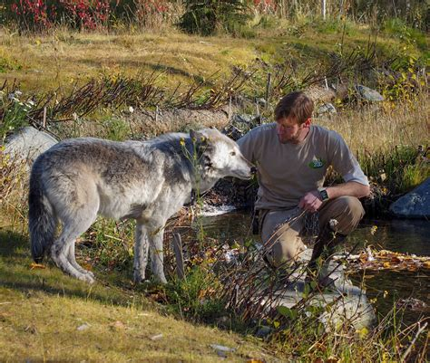 anchorage puppies get ready for wolf day in anchorage alaska media