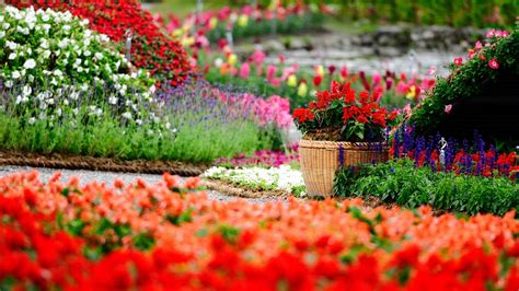 Tips To Create A Perfect Flower Garden Flowers Blog Ooty Flower Garden Blogs