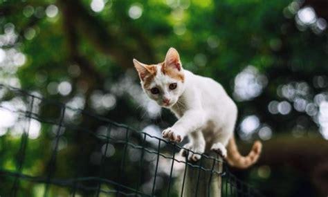 mencari kucing kamu  hilang terbukti ampuh