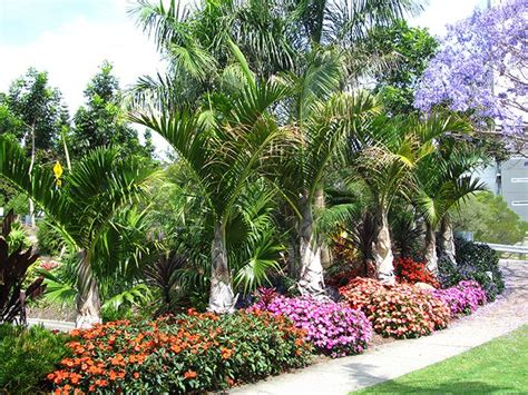 22 Best Images About My Tropical Garden On Pinterest Flower Shop Palm Gardens