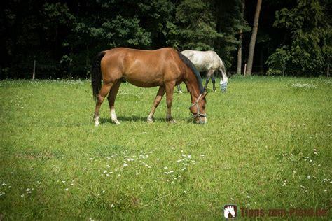 wann rasen wässern pferd zu oder zu d 252 nn
