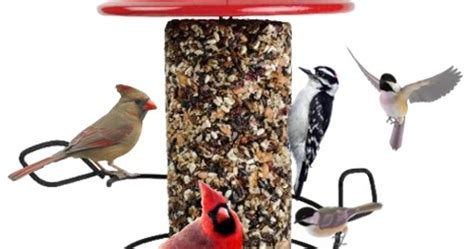 wild birds unlimited bird feeding tips
