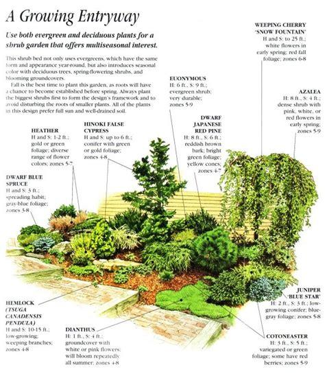front yard shrub garden trees and shrubs pinterest