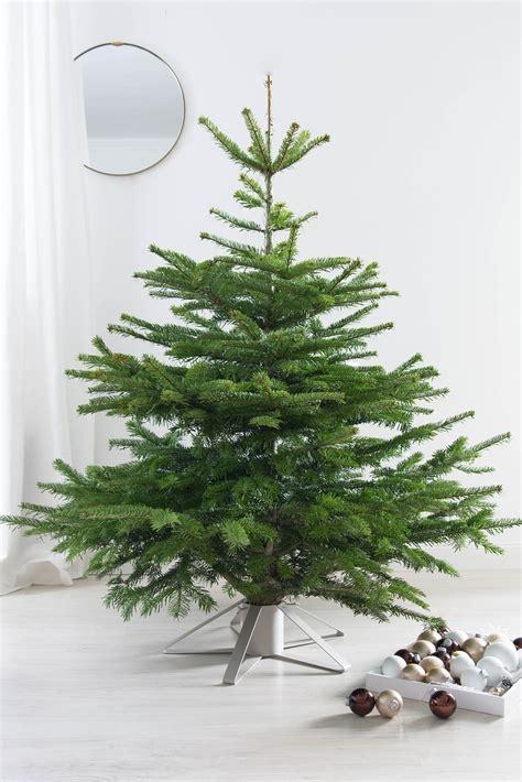 unser weihnachtsbaum kommt mit der post sinnenrausch