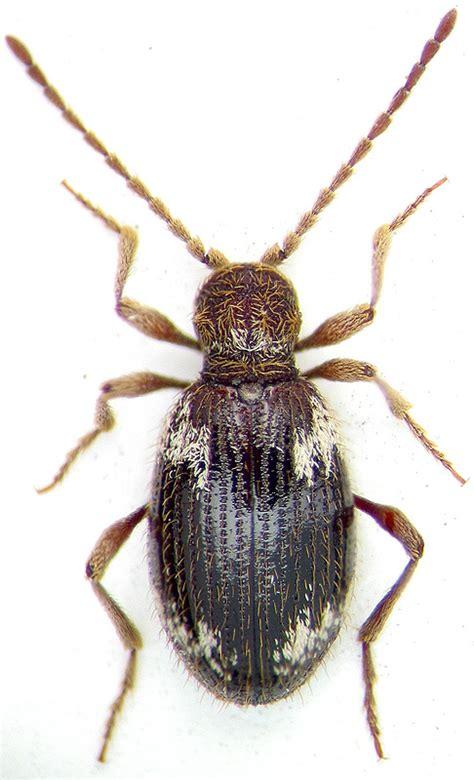 pantry bug pest control termite inspection orange county