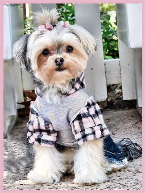 shih tzu top knot accessories shih tzu dogs so babies and dogs