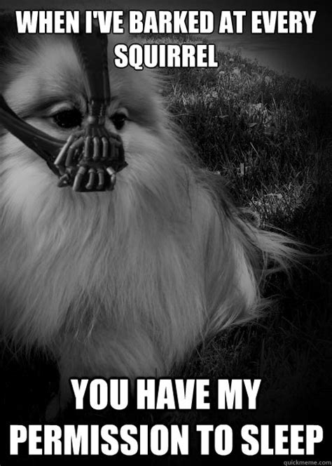 pomeranian meme 10 pomeranian memes dogs and puppies