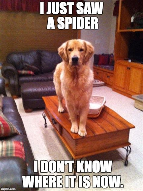 I Saw A Spider Meme - coffee table dog imgflip