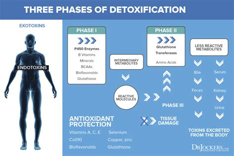 Xenoestrogens Detox by 8 Proven Ways To Improve Your Detoxification System