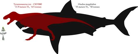 megalodon shark size tyrannosaurus and megalodon size comparison by