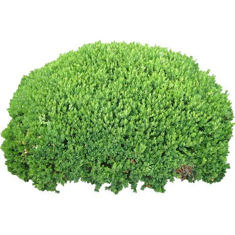 quality bush immediate entourage